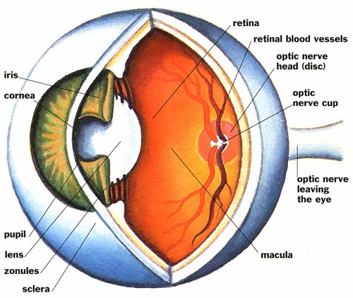 Night-Blindness-home-remedy